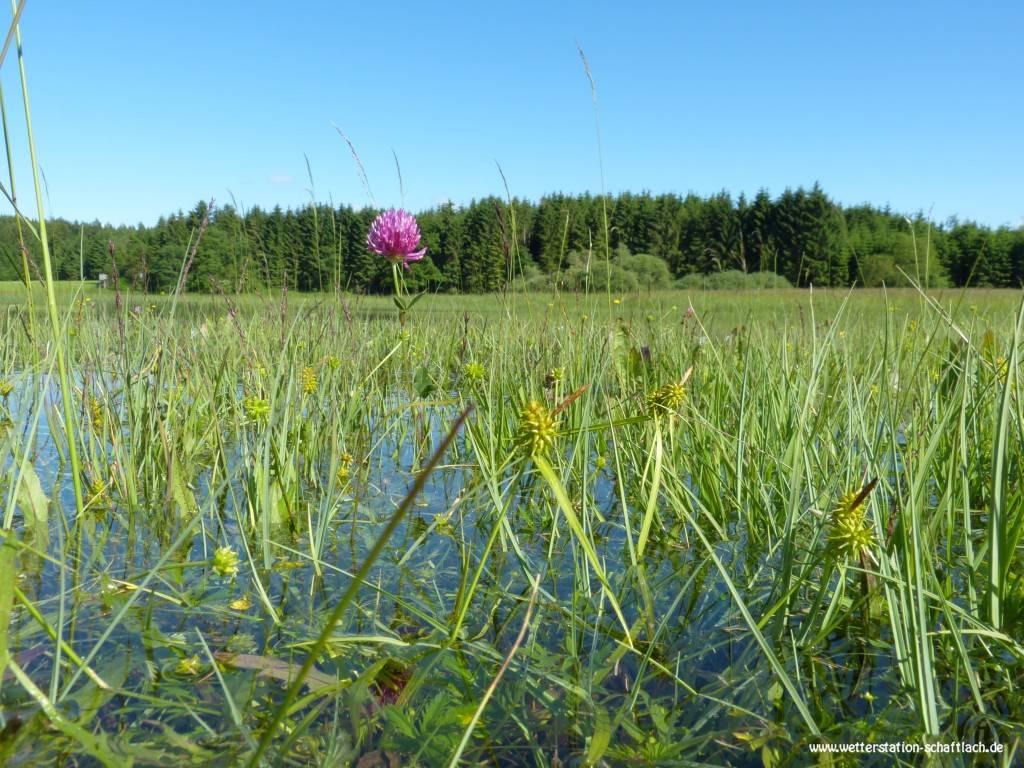 http://www.wetterstation-schaftlach.de/temp/20160620-06.jpg