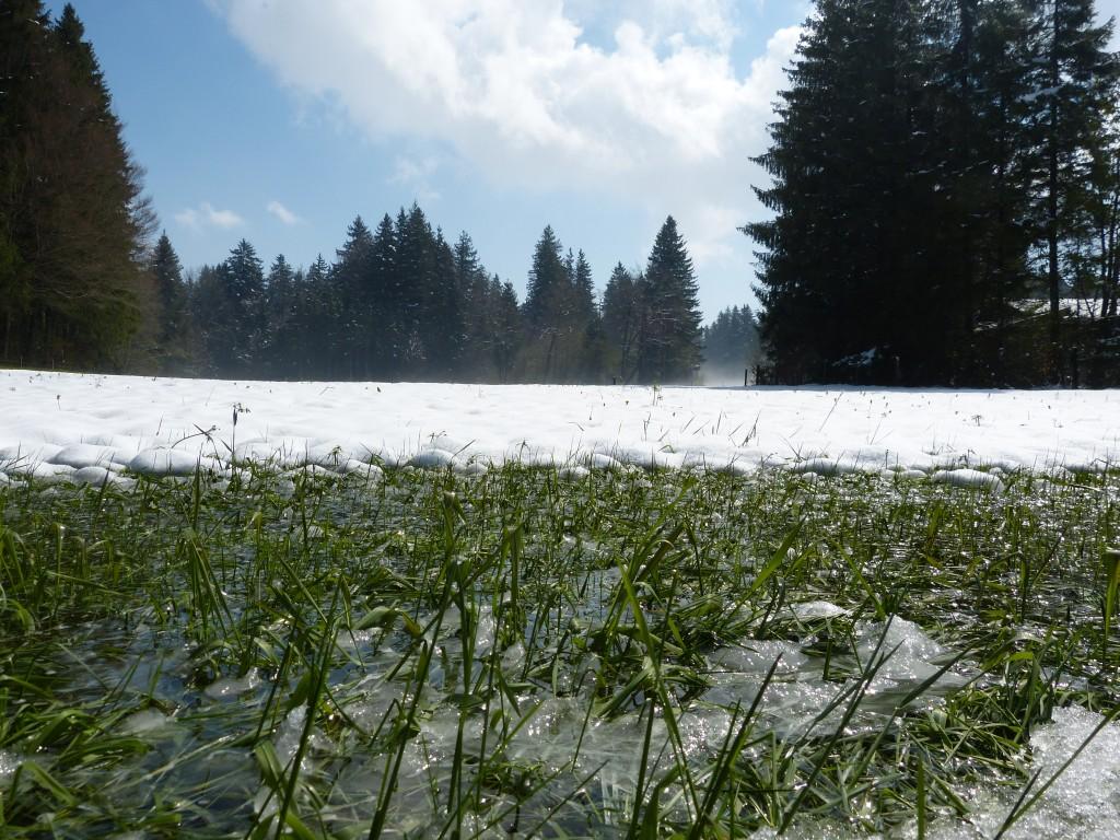 http://www.wetterstation-schaftlach.de/temp/20170429-4.jpg